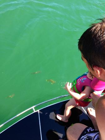 Table Rock Lake: clear water