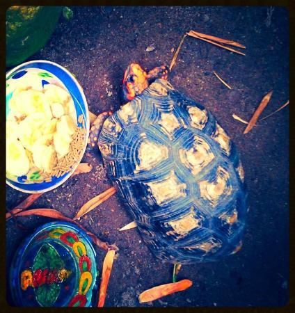 Casitas Tortugas : Tortugas