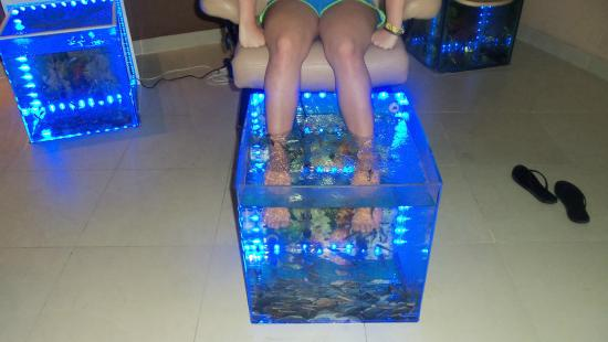 Fish pedicure picture of hard rock hotel casino punta for Fish pedicures illegal in 14 states