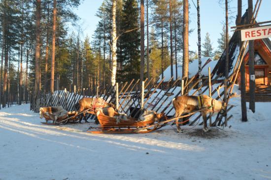Деревня Санта Клауса: Un petit tour en renne!