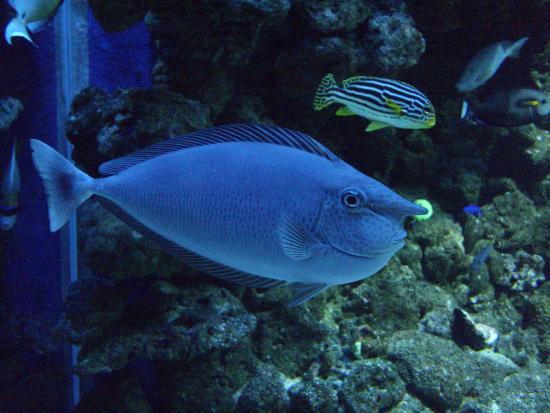 ... di Den Bla Planet, National Aquarium Denmark, Copenhagen - TripAdvisor