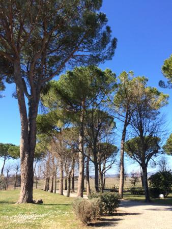 Villa Acquaviva: viale