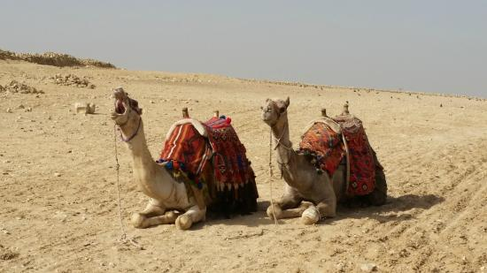 Sinai Safari Adventures: 1