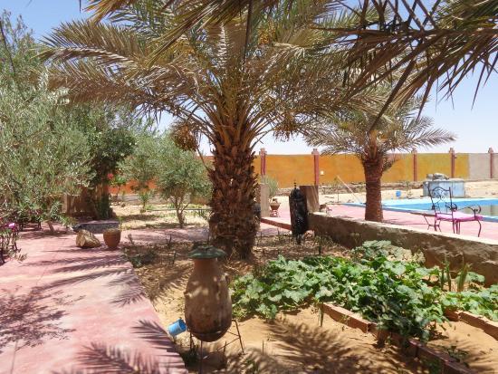 Auberge Amazir : Blick vom schattigen Sitzpaltz unter Palmen