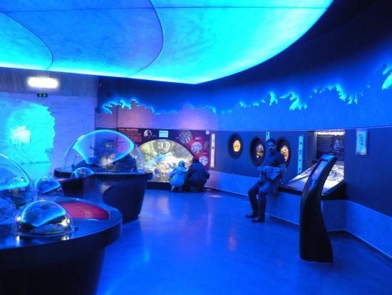 Istanbul Aquarium 16 - Picture of Istanbul Aquarium, Istanbul ...