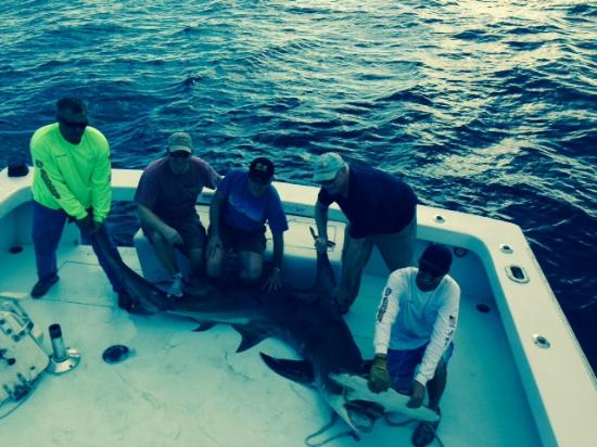 Hammerhead picture of therapy iv deep sea fishing for Deep sea fishing miami