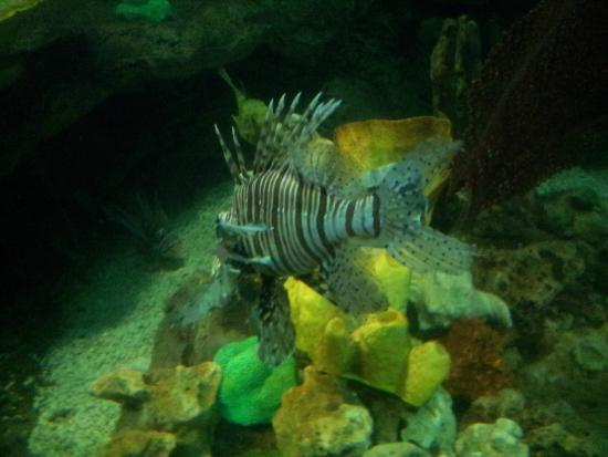 Fun times in Sea Life , Bray! - Foto di National Sea Life Centre, Bray ...