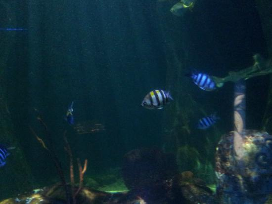 times in Sea Life , Bray! - Picture of National Sea Life Centre, Bray ...