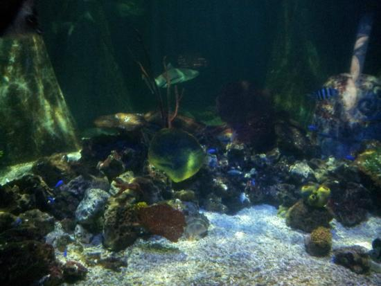 ... times in Sea Life , Bray! - Picture of National Sea Life Centre, Bray
