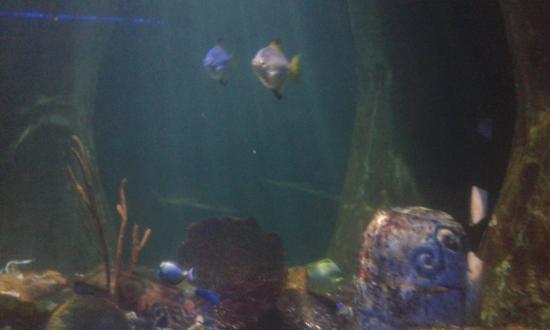 times in Sea Life , Bray! - Photo de National Sea Life Centre, Bray ...