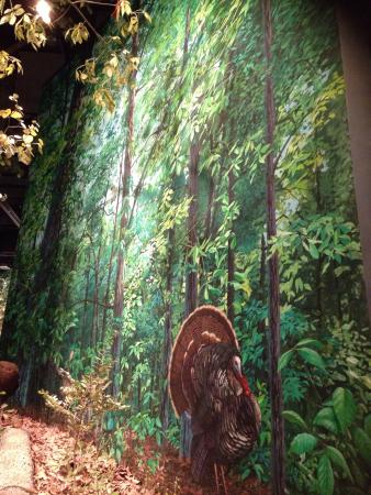 Sam Noble Oklahoma Museum of Natural History: Amazing hand painted canvas backdrops
