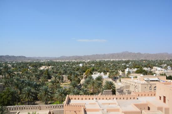 Nizwa, Oman: Vue sur la palmeraie depuis la tour