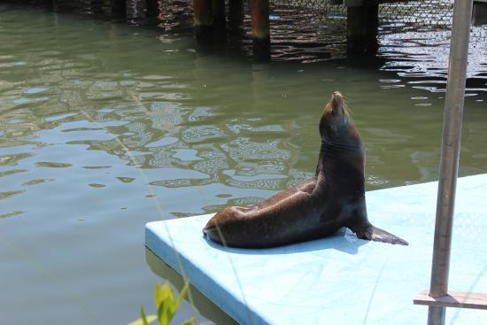 Dolphin Research Center: Es gibt dort nicht nur Delphine zu sehen;)