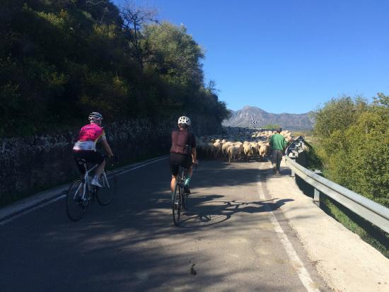 Andalucian Cycling Experience Day Trips: The Montecorto peleton