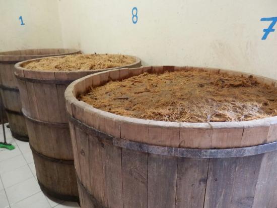 Agave Grill: Ilegal mezcal fermenting
