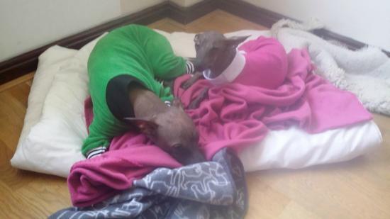 Comfort Hotel Eskilstuna: Hundarnas bädd på hotellet