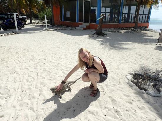 The Beach Bum Cafe : Friendly Iguanas