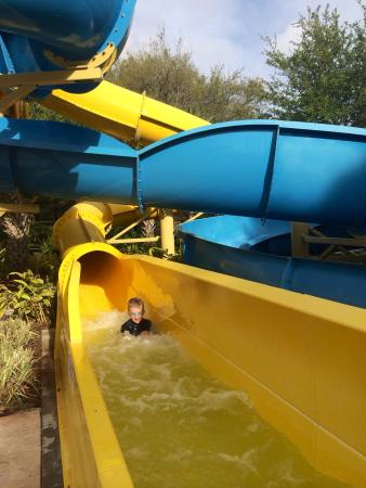 Renaissance Orlando at SeaWorld: Great slides for 42' and taller