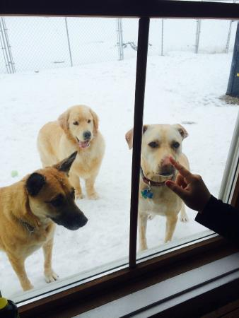 Paws Inn: Saying hi to the puppies while they play outside in their fenced in area