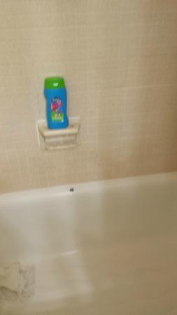 Budget Host Inn & Suites: Mold