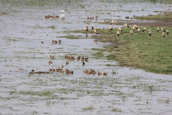 Deepor Beel Wildlife Sanctuary