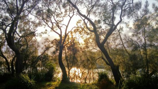 Cudmirrah, Australie : Swan lake - down the road