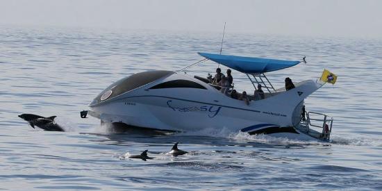 Tazacorte, Spain: delfines con fantasy