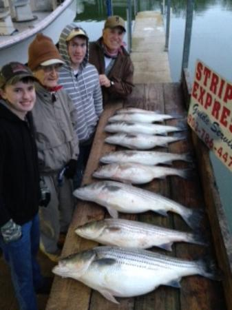 Striper Express Guide Service: Caught our limit & then some