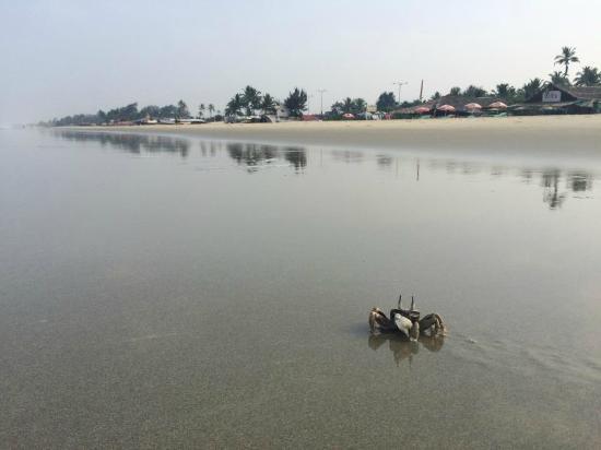 Benaulim Beach: Crabs :)