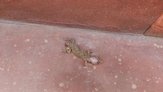 Aryan's Taj Resort: Lizard