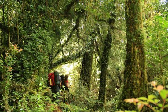Parque Tantauco