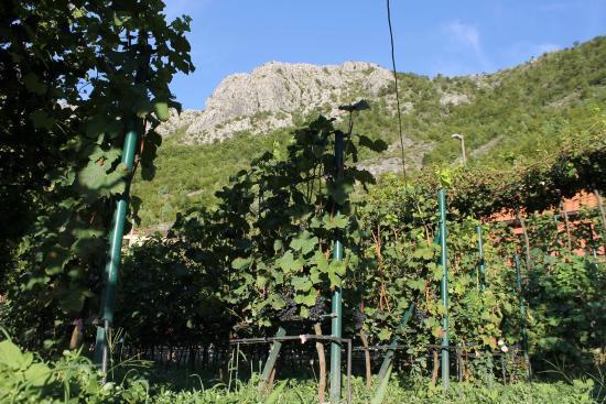 Landscape - Explore Skadar Lake - Agritourism and Multi-Activity Holidays Picture