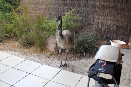 DULC Cabins: Visiting Emu