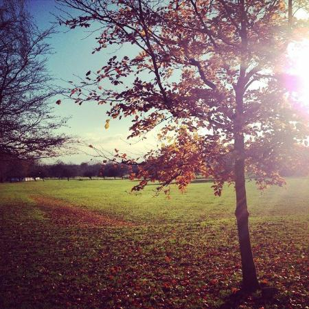 Coventry, UK: Autumn sun