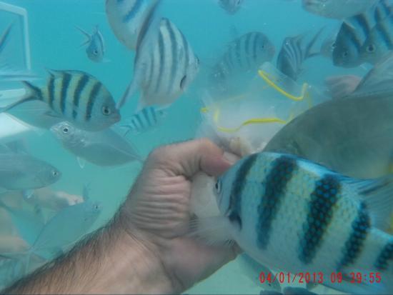 Seawalking: feed the fish
