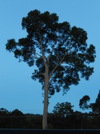 Batemans Bay Manor - Bed and Breakfast: View from the deck after sunset