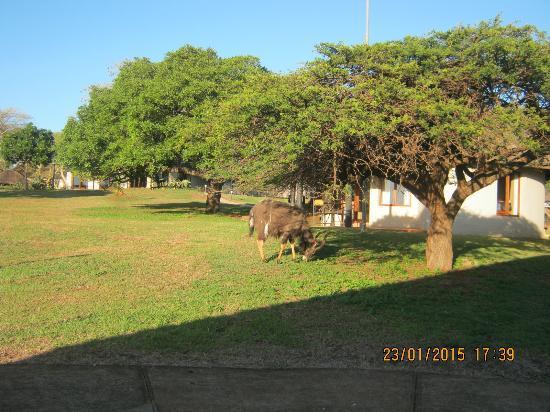 Ubizane Wildlife Reserve : View!