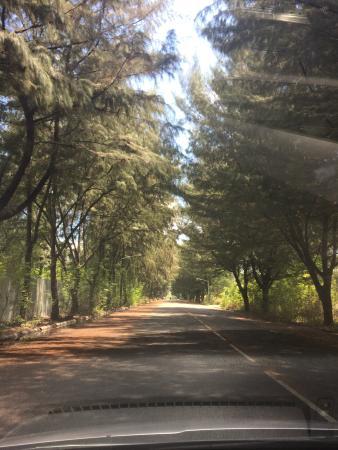 Fern Boquete Inn: drive from hotel