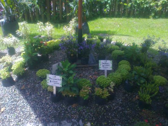 Entrada picture of jardin botanico de medellin medellin for Jardin 87