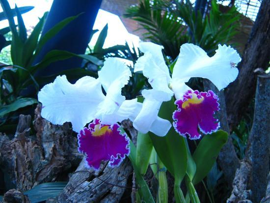 Jardin Botanico de Medellin Orquídeas