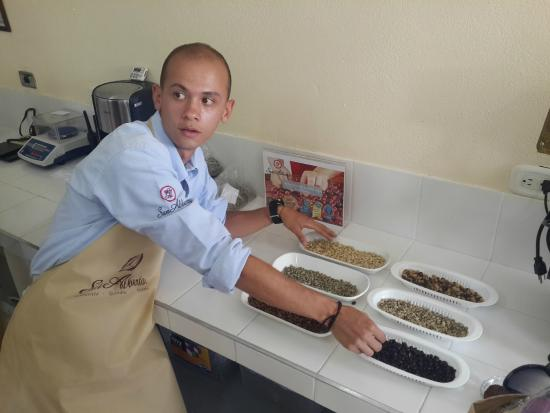 Cafe San Alberto: Tipos de Granos