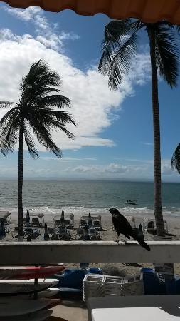 Hotel Surf Paradise: paisaje del hotel