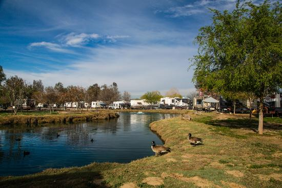 Pool Area Picture Of Wilderness Lakes Rv Resort Menifee Tripadvisor