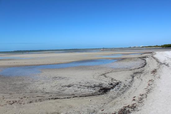 Bunche Beach: Low Tide