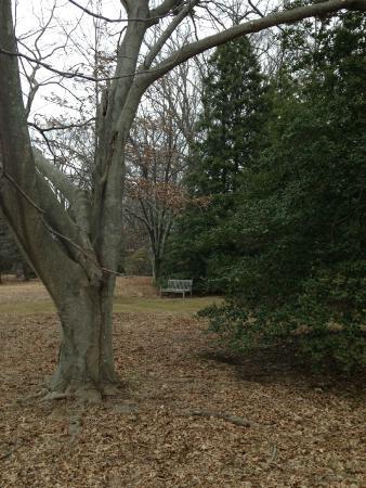 Tyler Arboretum : Peaceful place
