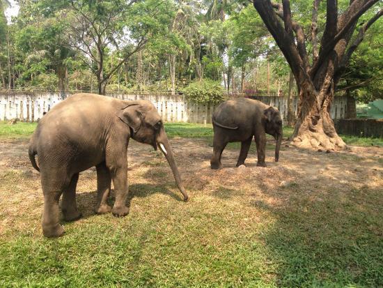 حديقة حيوان يانجون الرائعة