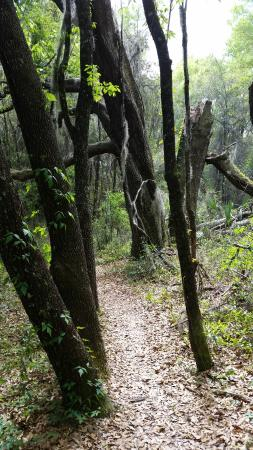 Santos - Belleview Trail: Nice views