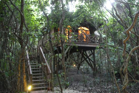 ‪‪Hamanasi Adventure and Dive Resort‬: Tree House Room at Hamanasi‬
