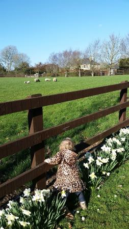 Fitzgerald's Woodlands House Hotel: Lovely grounds full of flowers and animals