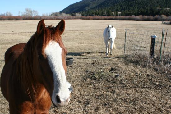 Boulder Hot Springs Inn and Spa : Horses in residence